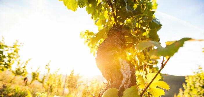 Eine Weinreise an der Nahe führt Sie durch wunderschöne Natur und pfälzische Kultur.