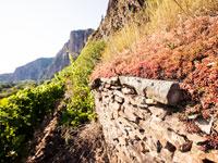 Die vielfältigen Weinlagen an der Nahe produzieren tolle Weine aus der Region.
