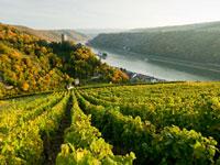 Bei Ihrer Weinreise an die Mosel werden auch Sie von den guten Wetterbedingungen profitieren.
