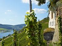 Geniessen Sie bei Ihrer Weinreise eine Wanderung durch die einzigartige Natur des Mosel-Gebiets.