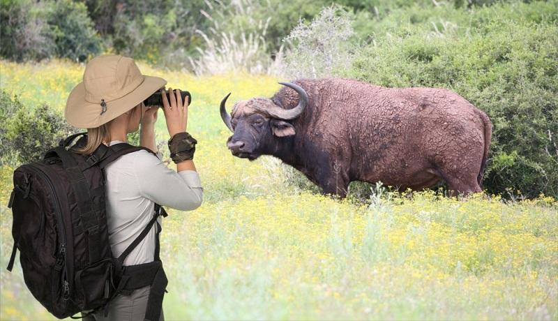 Tiere in freier Wildbahn zu beobachten, gehört zu den schönsten Aktivitäten für Reise-Fans. ( Foto: Shutterstock- _Four Oaks )