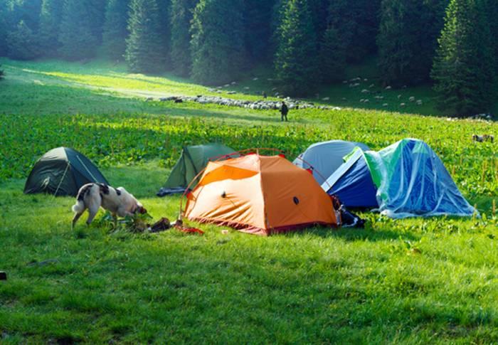Jeder Campingplatz wird dem Vierbeiner gefallen. (Foto: shutterstock - Roman Mikhailiuk)
